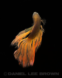 BETTA024_SAC_CO_CA_2017-07-11_D01_25_6663