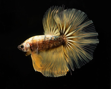 BETTA797_SAC_CO_CA_2019-08-20_D01_25_2705
