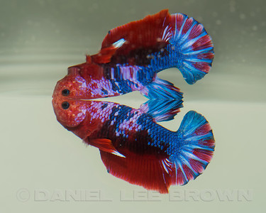 BETTA017_SAC_CO_CA_2017-07-07_D01_25_5856