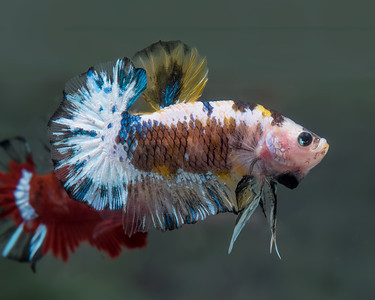 BETTA453_SAC_CO_CA_2018-09-06_D01_25_0578