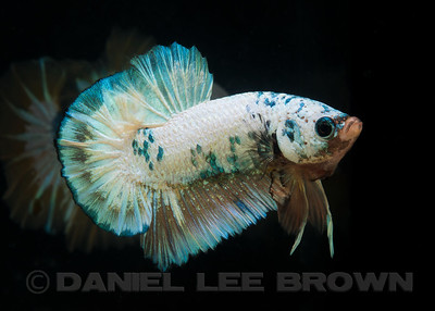 BETTA021_SAC_CO_CA_2017-07-09_D01_25_6299