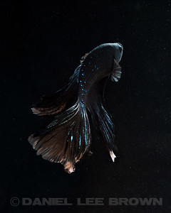BETTA025_SAC_CO_CA_2017-07-11_D01_25_6871