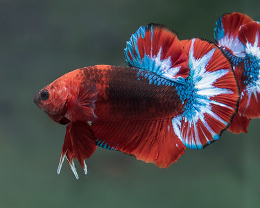 BETTA455_SAC_CO_CA_2018-09-06_D01_25_0621