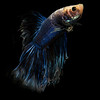 BETTA015_SAC_CO_CA_2017-07-07_D01_25_5399