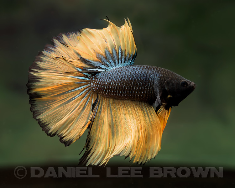BETTA086_SAC_CO_CA_2017-09-15_D01_25_2748