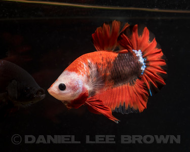 BETTA011_SAC_CO_CA_2017-07-06_D01_25_4932