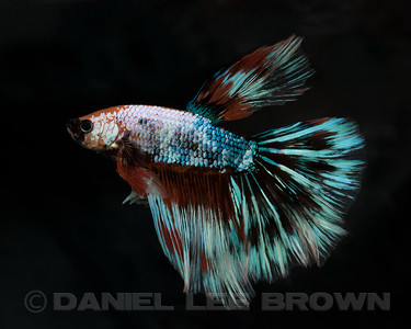BETTA002_SAC_CO_CA_2017-06-30_D01_25_3112