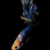 BETTA015_SAC_CO_CA_2017-07-07_D01_25_5597