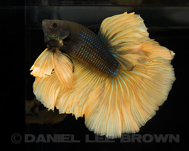 BETTA026_SAC_CO_CA_2017-07-12_D01_25_6947
