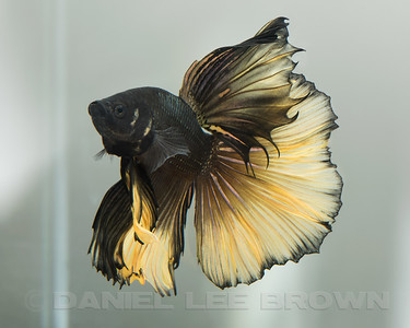 BETTA027_SAC_CO_CA_2017-07-12_D01_25_7028