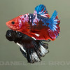 BETTA017_SAC_CO_CA_2017-07-07_D01_25_5783
