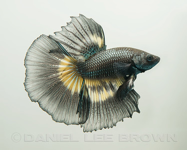 BETTA005_SAC_CO_CA_2017-07-01_D01_2500_3615