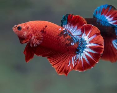 BETTA456_SAC_CO_CA_2018-09-06_D01_25_0633