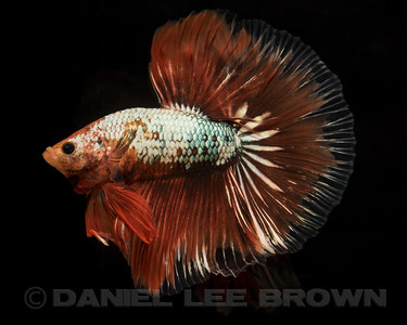 BETTA032_SAC_CO_CA_2017-07-14_D01_25_7755