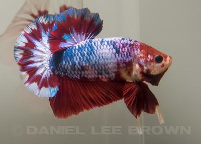 BETTA009_SAC_CO_CA_2017-07-04_D01_25_4340