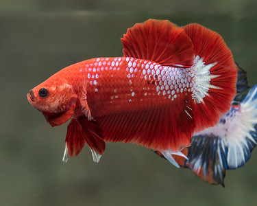 BETTA451_SAC_CO_CA_2018-09-06_D01_25_0535