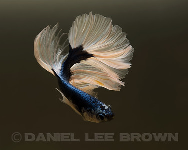BETTA006_SAC_CO_CA_2017-07-02_D01_25_4092