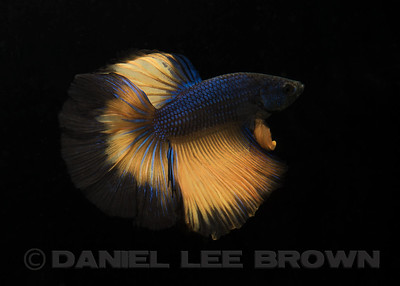 BETTA018_SAC_CO_CA_2017-07-09_D01_25_6035