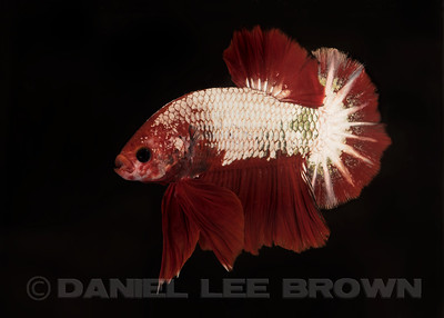 BETTA1_SAC_CO_CA_2017-06-29_D01_2500_2768