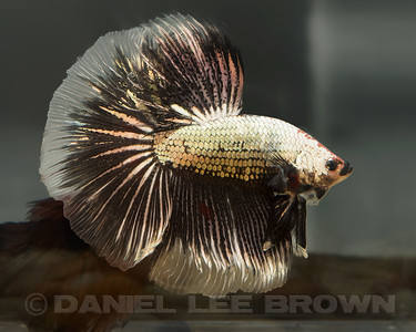 BETTA031_SAC_CO_CA_2017-07-13_D01_25_7518
