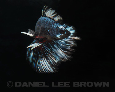 BETTA014_SAC_CO_CA_2017-07-07_D01_25_5316