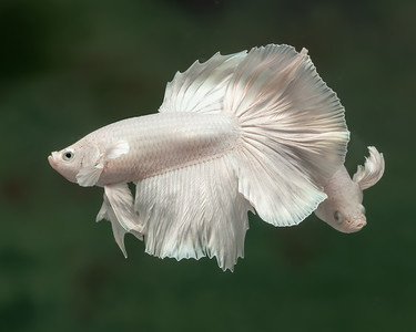 BETTA817_SAC_CO_CA_2019-09-13_25_8502025