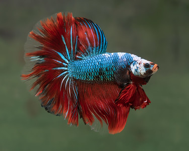 BETTA793_SAC_CO_CA_2019-08-20_D01_25_2599