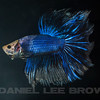 BETTA015_SAC_CO_CA_2017-07-07_D01_25_5940