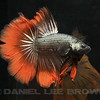 BETTA023_SAC_CO_CA_2017-07-11_D01_25_6500