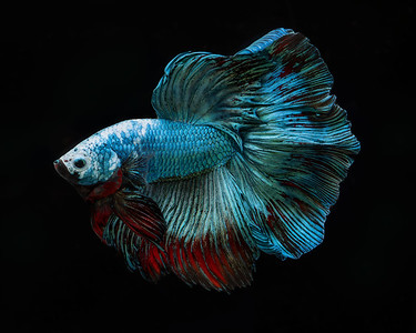 BETTA798_SAC_CO_CA_2019-08-20_D01_25_2758