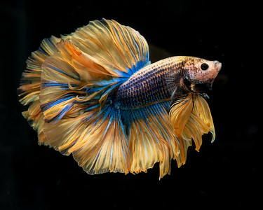 BETTA820_SAC_CO_CA_2019-09-13_25_8502102