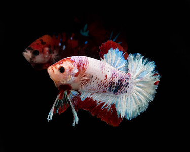 BETTA733_SAC_CO_CA_2019-06-20_D01_25_0349