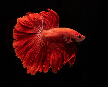 BETTA796_SAC_CO_CA_2019-08-20_D01_25_2685