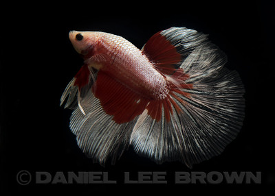 BETTA010_SAC_CO_CA_2017-07-04_D01_25_4442