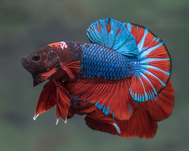 BETTA457_SAC_CO_CA_2018-09-06_D01_25_0669