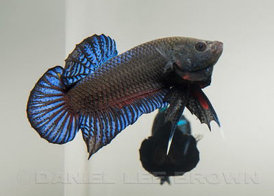 BETTA012_SAC_CO_CA_2017-07-06_D01_25_4640