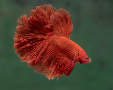BETTA819_SAC_CO_CA_2019-09-13_25_8502048