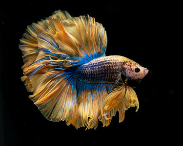 BETTA820_SAC_CO_CA_2019-09-13_25_8502097