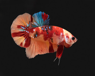 BETTA738_SAC_CO_CA_2019-06-20_D01_25_0468