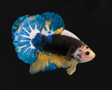 BETTA729_SAC_CO_CA_2019-06-20_D01_25_0231
