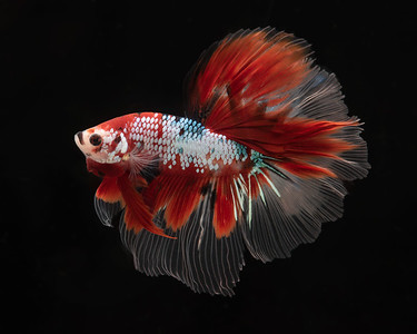 BETTA800_SAC_CO_CA_2019-08-20_D01_25_2832