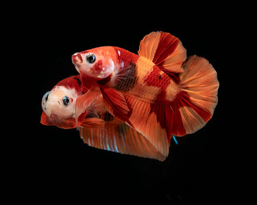 BETTA802_SAC_CO_CA_2019-08-20_D01_25_2888