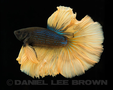 BETTA026_SAC_CO_CA_2017-07-12_D01_25_6982