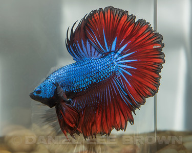 BETTA029_SAC_CO_CA_2017-07-13_D01_25_7200