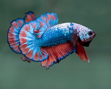 BETTA449_SAC_CO_CA_2018-09-06_D01_25_0484