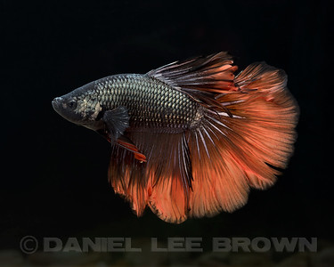 BETTA023_SAC_CO_CA_2017-07-11_D01_25_6492