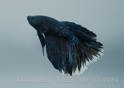 BETTA025_SAC_CO_CA_2017-07-11_D01_25_6863
