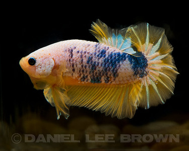 BETTA020_SAC_CO_CA_2017-07-09_D01_25_6230
