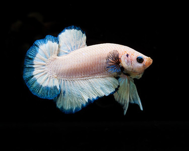 BETTA728_SAC_CO_CA_2019-06-20_D01_25_0219