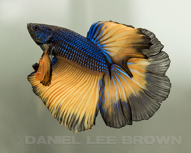 BETTA018_SAC_CO_CA_2017-07-09_D01_25_6010